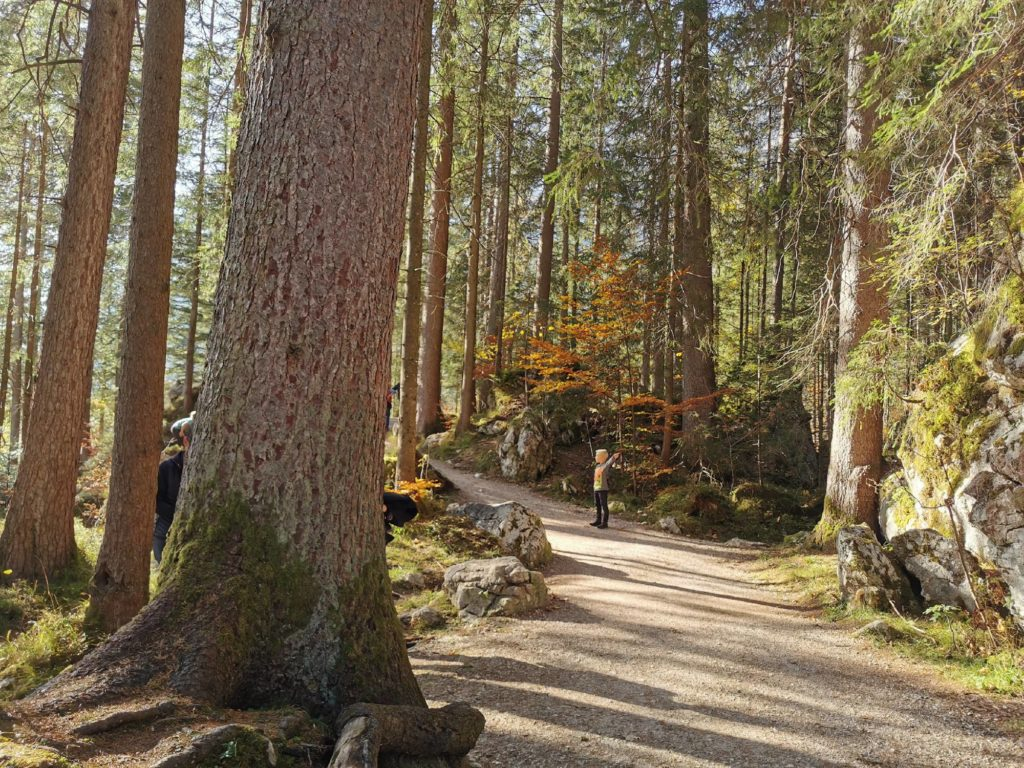 Das ist der  Prinzregent-Luitpold-Weg im Hintersee Zauberwald