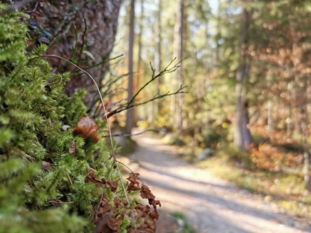 Bei der Rundwanderung um den See ist das Landschaftsbild abwechslungsreich: mit Wald ....