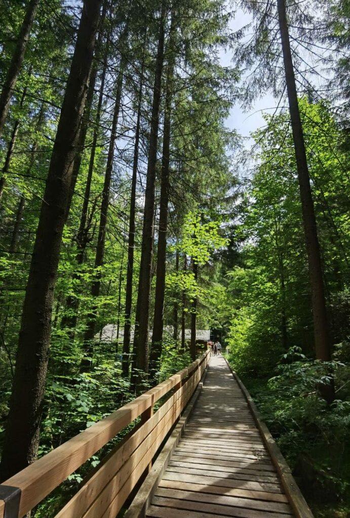 Zauberwald Ramsau Rundwanderweg - über diese Holzbohlen